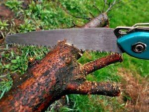 גזימת עץ